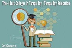 The 4 Best Colleges In Tampa Bay | Tampa Bay Relocation